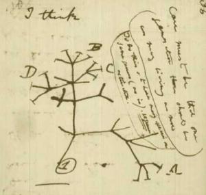 Eine Seite aus Darwins Notizbuch
